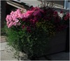 Annuals/bedding plants